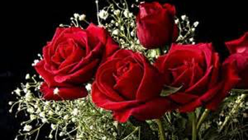 12 Roses of the Winning Gentleman