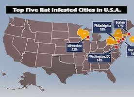 Philadelphia is the most rat infested city in the United States