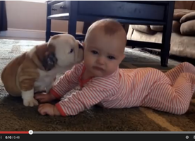 Bulldog Puppy Kissing Baby is Too Precious