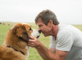 American Humane: Third-party report clears 'A Dog's Purpose'