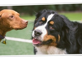 Advantages Of Hiring A Professional Doggy Day Care Service