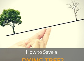 How to Save a Dying Tree? - Just Another Food Blog - GoodFoodFun.com