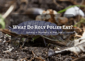 What Do Roly Polies Eat? - Solving a Mystery in the Soil - Just Another Food Blog - GoodFoodFun.com