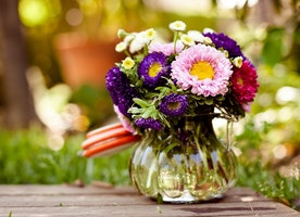 The Magic and Essence of Flowers!