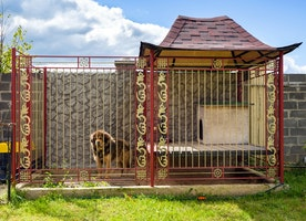 Few Guidelines for Purchasing Dog Kennel