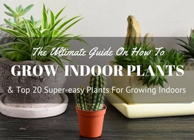 The Ultimate Guide On How To Grow Indoor Plants And Top 20 Super-easy Plants For Growing Indoors
