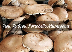 How To Grow Portobello Mushrooms: All You Need To Know - Just Another Food Blog - GoodFoodFun.com