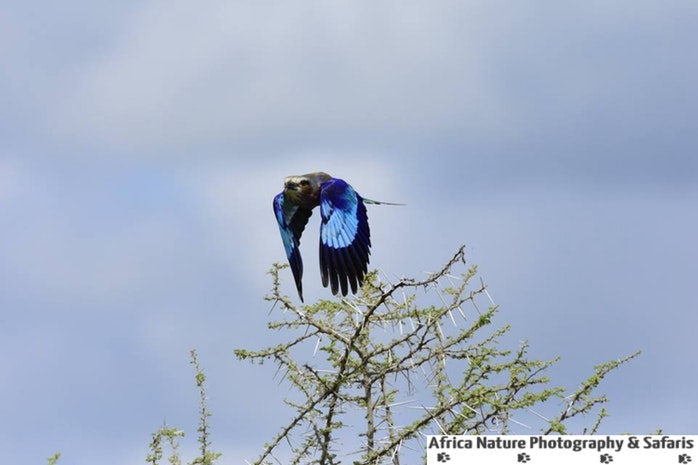 Tanzania Birding Expeditions.