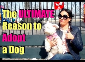 The ULTIMATE Reason to Adopt a Dog