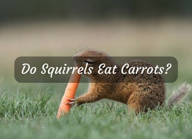 Do Squirrels Eat Carrots? We Have the Answers! - Just Another Food Blog - GoodFoodFun.Com