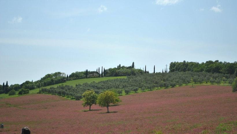 Springtime in Tuscany