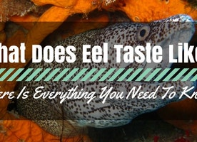 What Does Eel Taste Like? Here Is Everything You Need To Know