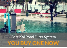 Best Koi Pond Filter System Reviews, Best Koi Pond Filter System, Koi Pond Filtration System