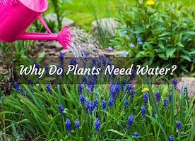 Why Do Plants Need Water? We Have Answers! - Just Another Food Blog - GoodFoodFun.Com