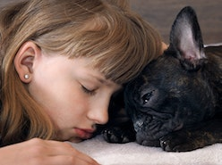 What Do Dogs Dream About? - American Kennel Club