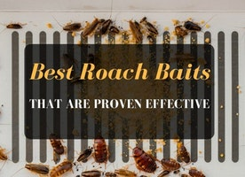 5 Best Roach Baits That Are Proven Effective | 2017 | COMPARISON