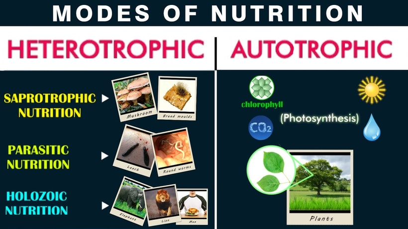 5 Key Differences Between Autotrophic And Heterotrophic Mode Of Nutrition