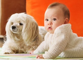 Is The Family Dog a Danger to Your Newborn Baby?