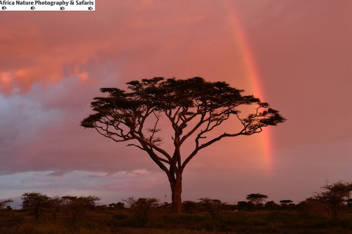 Wildlife, Nature and Expeditions, Tanzania.