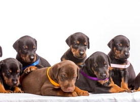Choosing a Puppy Food for all Breed