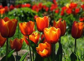 Summer season Flowers - Leading Ten List For Your Summer season Flower Garden