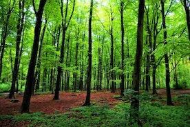 The Vast Forest of My Voice
