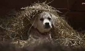 My Favorite Super Bowl Commercial :- )