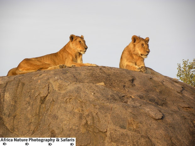 Tanzania, Best Wildlife Country in Africa.
