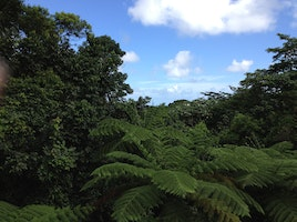 Rain Forest in Puerto Rico