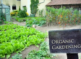 Tips That All Gardeners Should Know