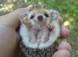 Cutest baby animals <3