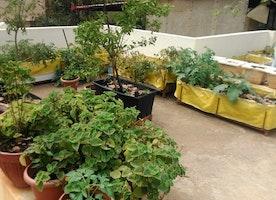 Terrace Garden Services To Help You In Building Of A Terrace Garden
