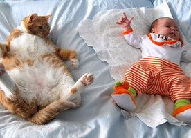 These Pictures Prove Cats are a Baby's Best Friend.
