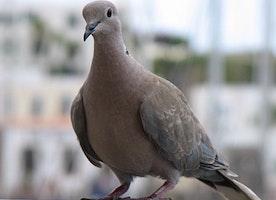 Damned-Birds