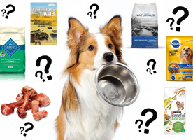 Deciphering Dog Food Ingredients
