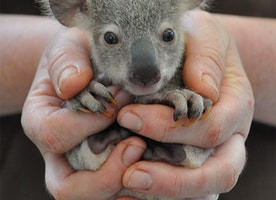 These 13 Baby Animals Held in the Palms of Hands are Precious!