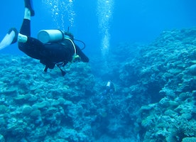Woman Molested 12 Meters Below Sea Level by Diving Instructor: Hideous and Shocking