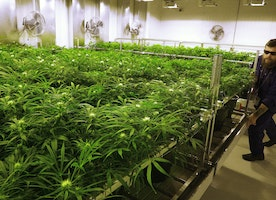 5 Facts About Marijuana Policy and Effects