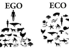 From Ego-System to Ecosystem: Shifting the Story of America & Ourselves
