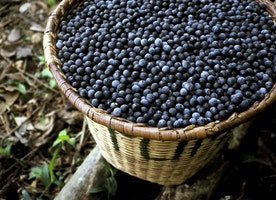 Le Proprietà Del Caffè Verde Erboristeria E Come Le Bacche Di Acai Fanno Dimagrire