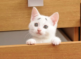 8-Week-Old 'Concerned Kitten' Will Brighten Your Day