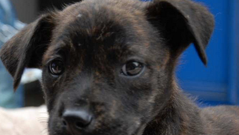 Meet The Cutest Puppies Ever Who Need A Home! # ...