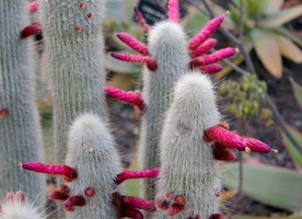 Top 10 most mysterious desert plants