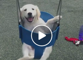 This might be the cutest dog video of the day