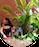 Saba parween