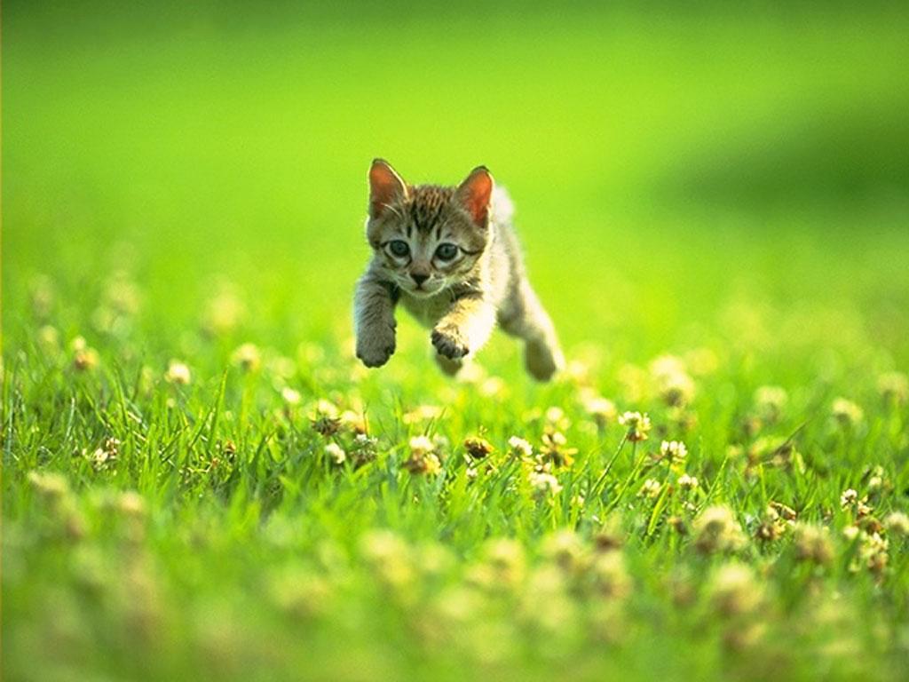Cute kitten playing.jpg?ixlib=rails 0.3